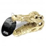 Sọ Cá Sấu Hang Động Bể Cá